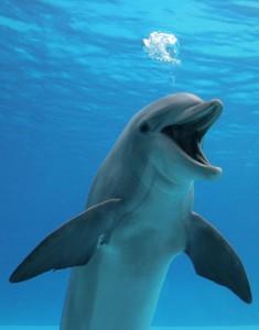 bottlenose_dolphin_photografrica_21