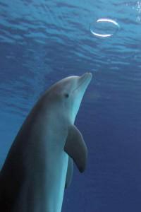 bottlenose_dolphin_photografrica_3