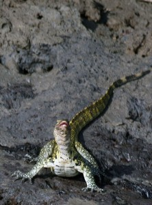 water_monitor_photografrica_1